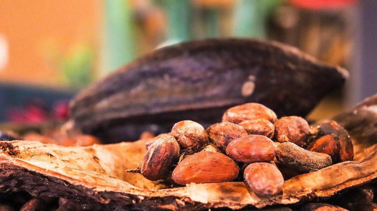 カカオ cacao