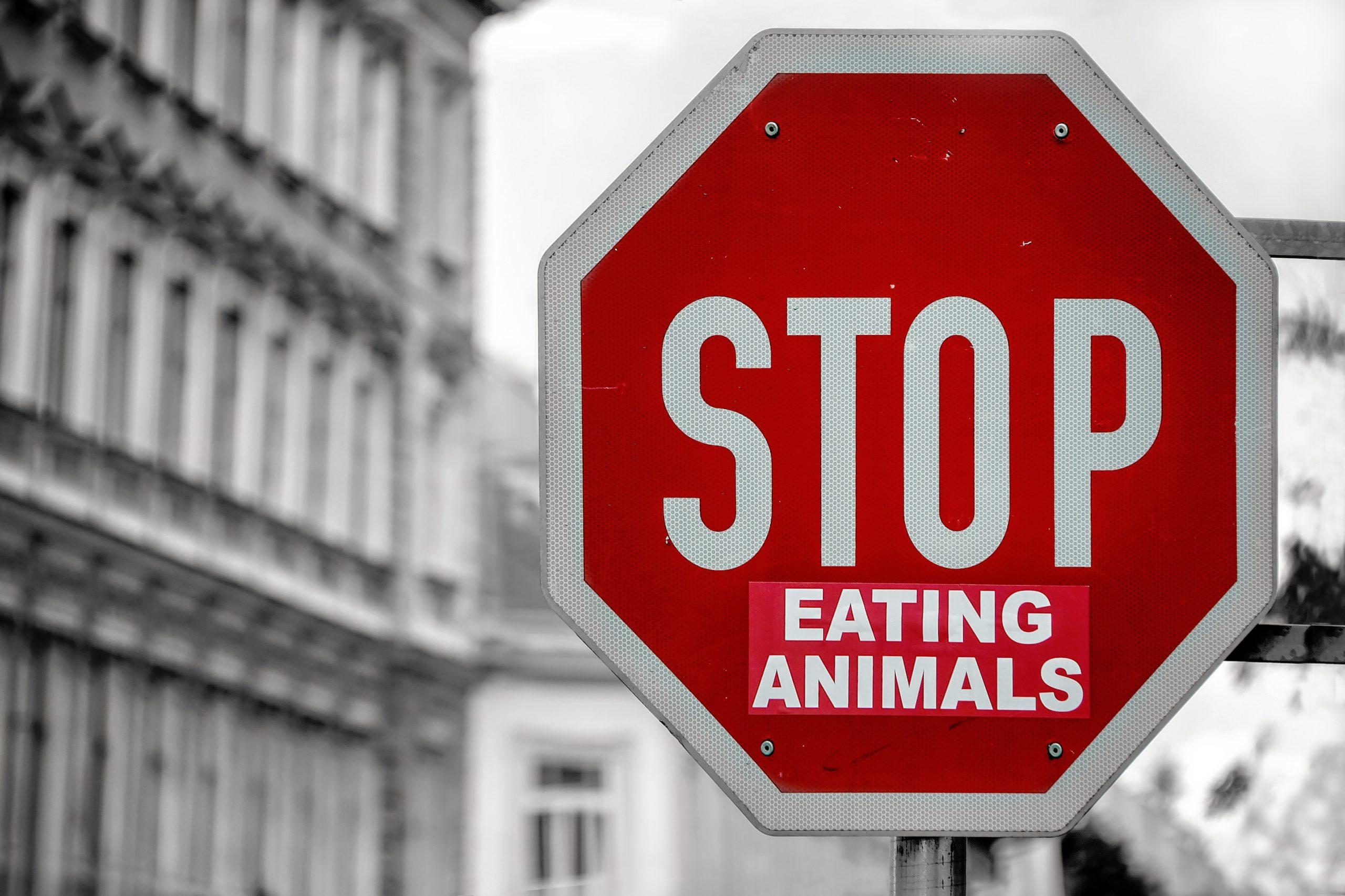 ヴィーガンになる背景 動物を食べるのをやめよう